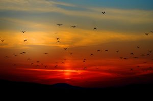 sunset-meaningful prayer high holidays jewish orthodox thornhill toronto